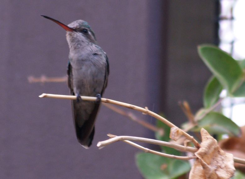 oiseau long bec petit oiseau long bec fin